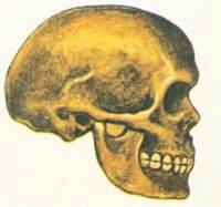 Первые современные люди Череп кроманьонца