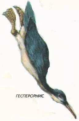 Гесперорнис - древняя морская птица