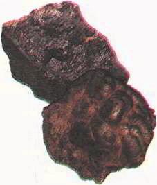 Наиболее распространенные железные руды: магнетит и гематит