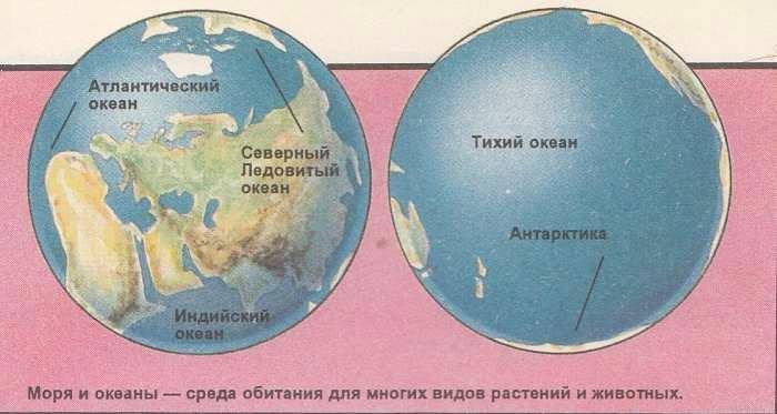 Моря и океаны среда обитания для