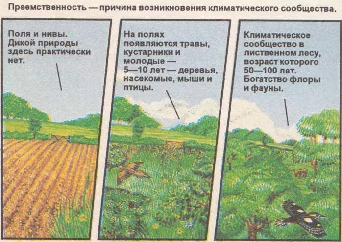 Картинки об изменении природы человеком
