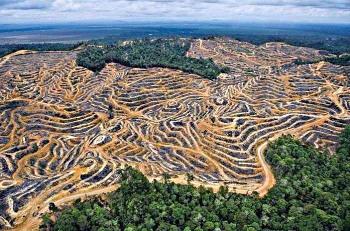 Почему в африке сократилась площадь влажных экваториальных лесов