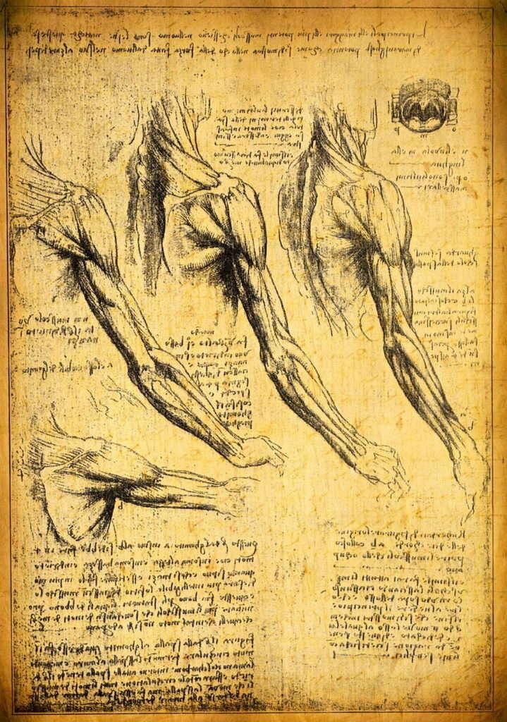 Некоторые из многих анатомических рисунков Леонардо