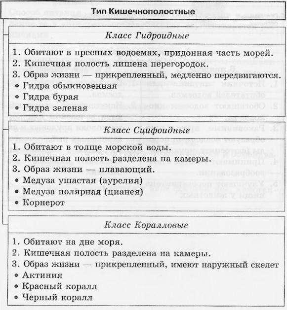 классы типа кишечнополостных таблица