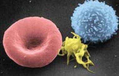 Элементы крови человека