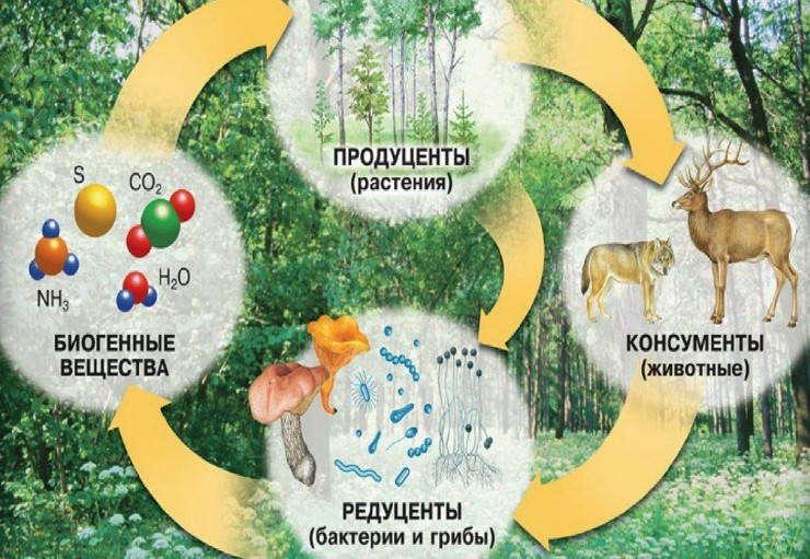 пространство занятое биоценозом называется